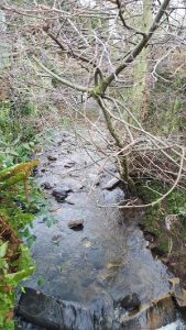 Tree over beck 2